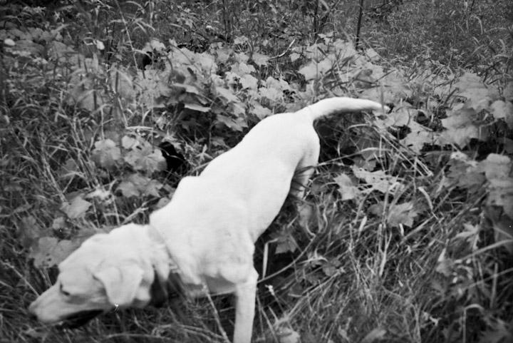 rassberryhunt.01-3