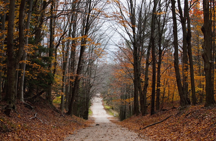 fall, seasons, forest, woods, farm, dirt road, autum, leaves, orange, halloween, light, eveing, colorful, color, michigan, mid west,